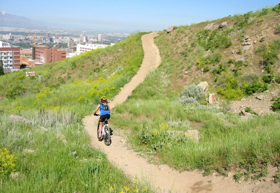 """Zoo-TO-U"" Foothill Trails Renovation Project"